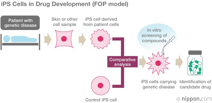 Japanese iPSC On the Cusp of a Stem Cell Revolution
