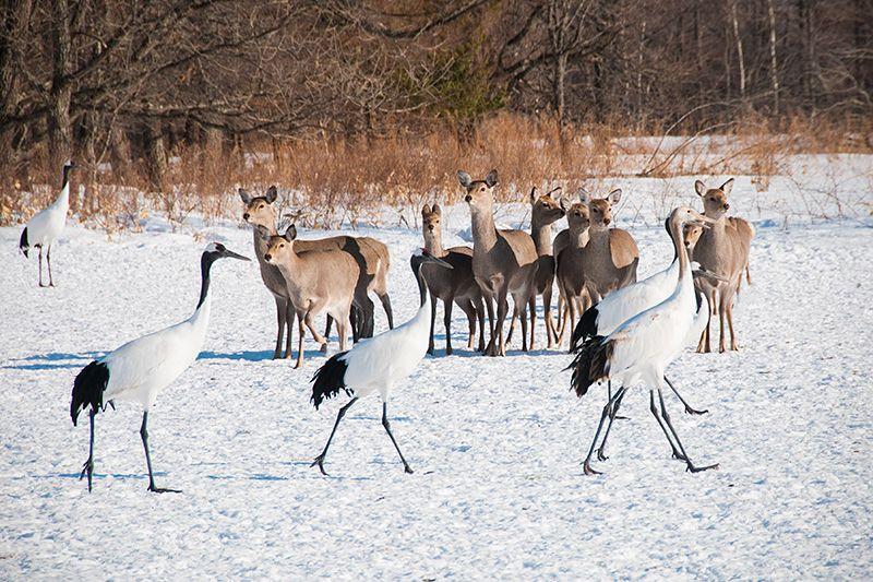 A Thousand Cranes Take Flight | Nippon.com