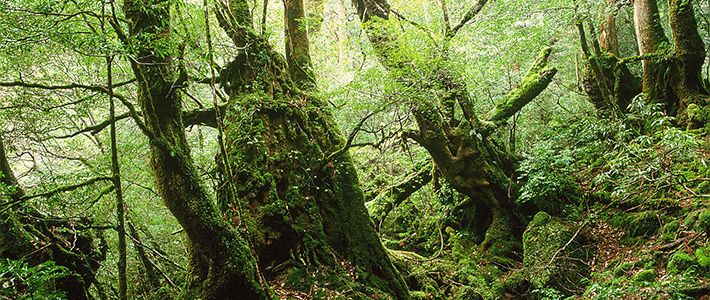 Japan's Forests: From Lumber Source to Beloved Resource
