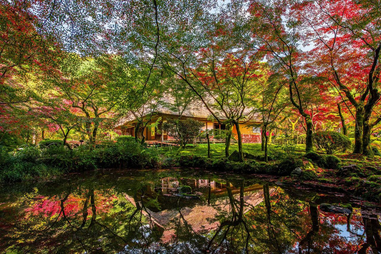 Scenic Sights of Saga: The Rich Autumn Foliage of Kunen\'an | Nippon.com