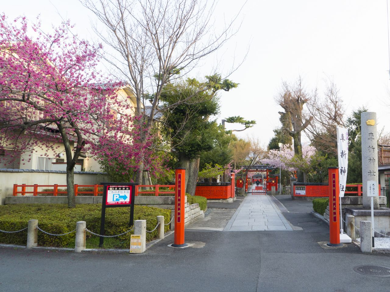 A Taiwan cherry tree blooms brilliantly near the shrine name posts (the remains of what was once a second torii), which stand on the way to the main torii.