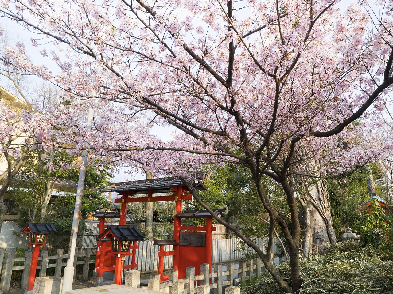 The cherry blossoms in bloom near the third torii, also a popular spot for the turning of the leaves in autumn.