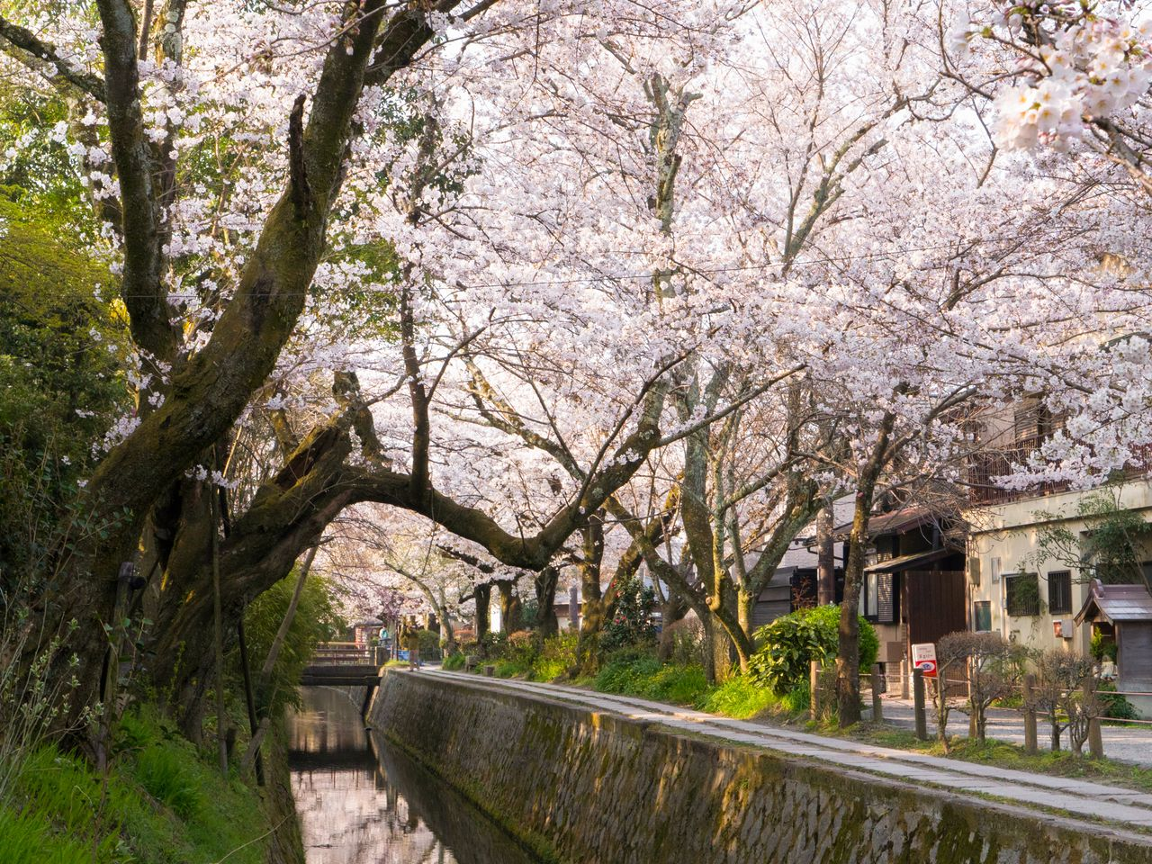 Small stone bridges add to the scenic view of the canal and cherry blossoms.