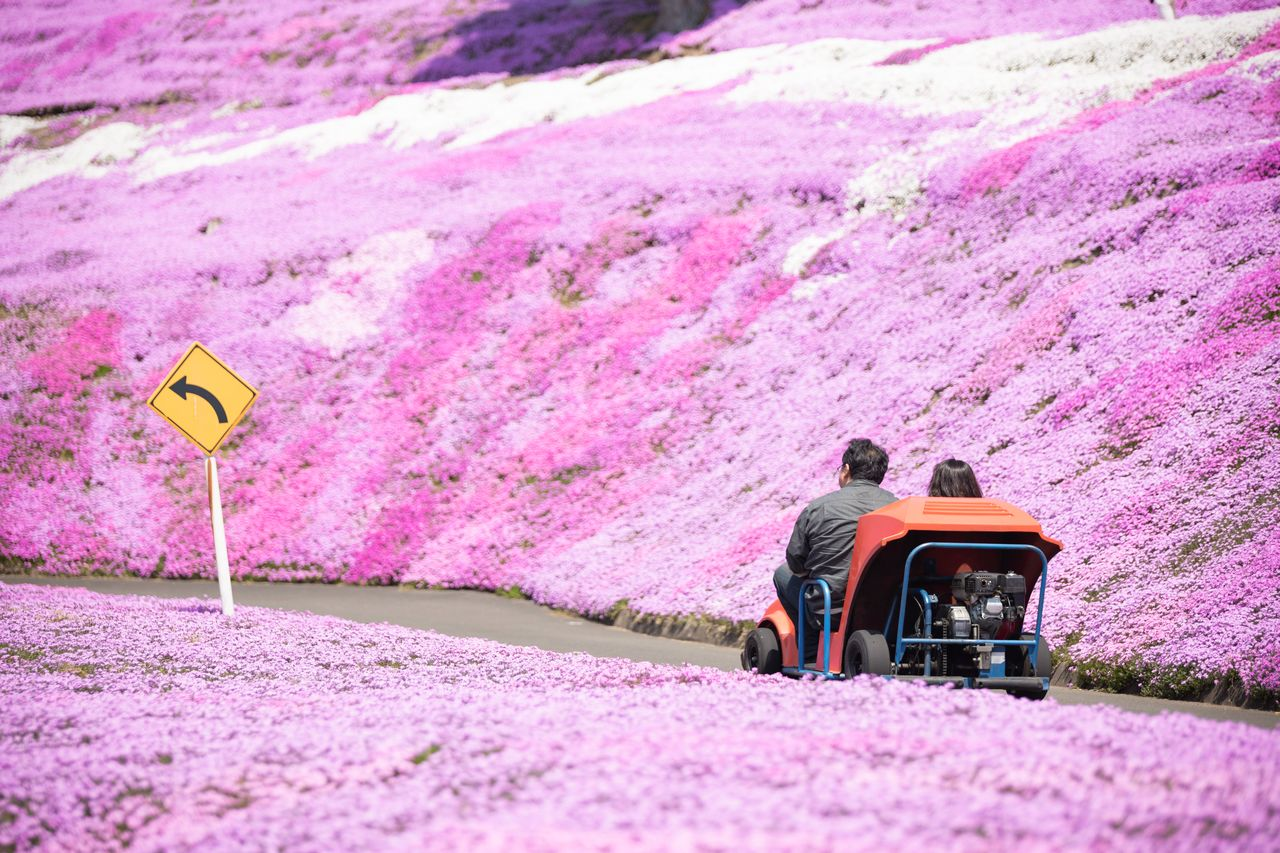 Visitors can drive go-carts through vistas of pink.