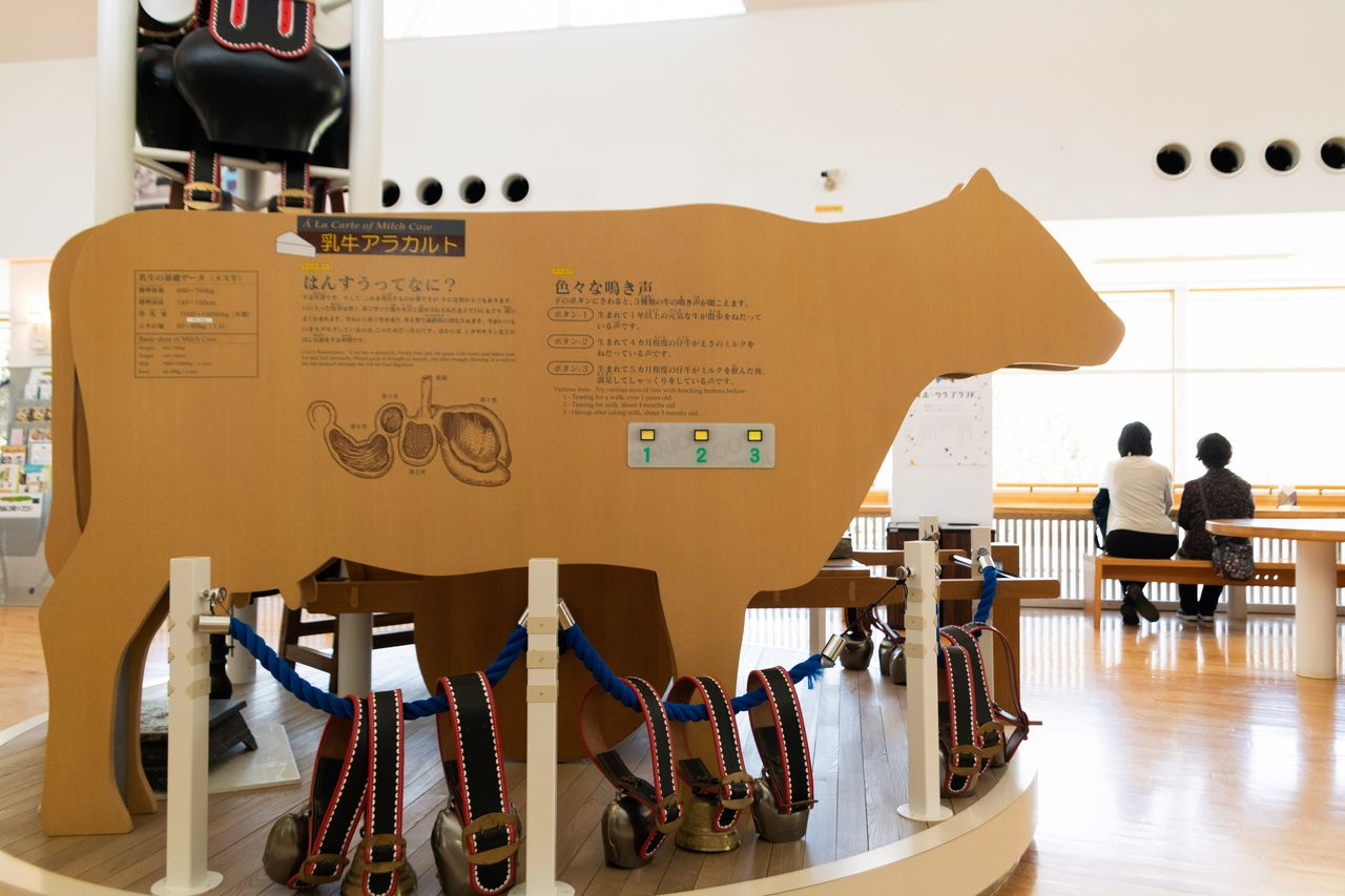 A life-size panel in the shape of a dairy cow presents basic information about these animals while playing recordings of their sounds.