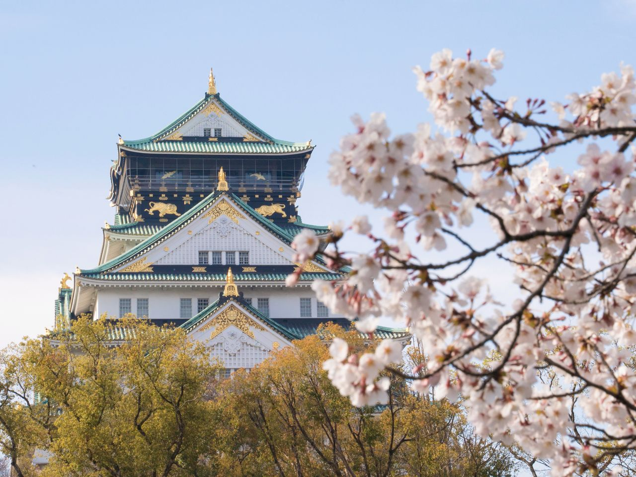 Cherry blossoms in the Nishinomaru Garden, with the castle in the background.