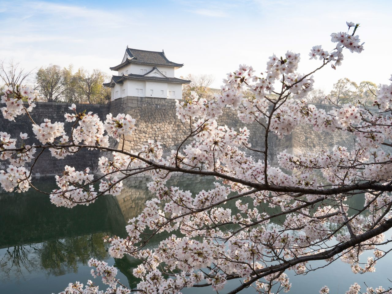 <em>Somei yoshino</em> cherry blossoms frame a view of the Rokuban Turret, an important cultural property, across the moat.