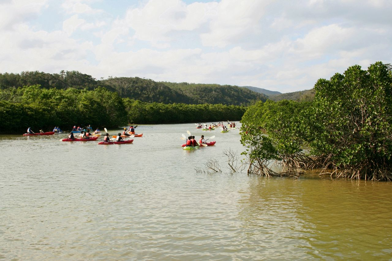 Visitors can enjoy the view from kayaks of trees in the Hirugi Forest, about a kilometer from Gesashi Bay. (Courtesy OCVB)