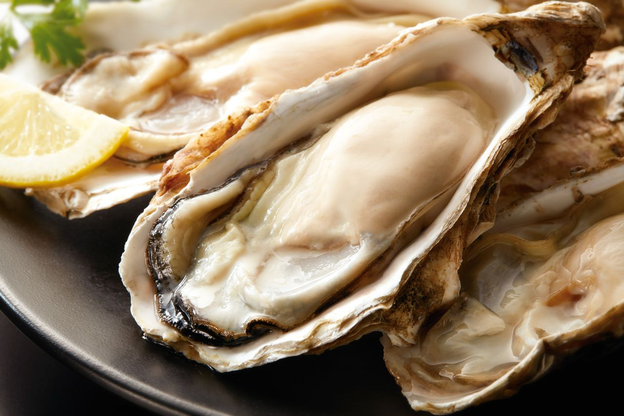 Oyster harvests are proving favorable, and prices are lower than last season. (© Pixta)