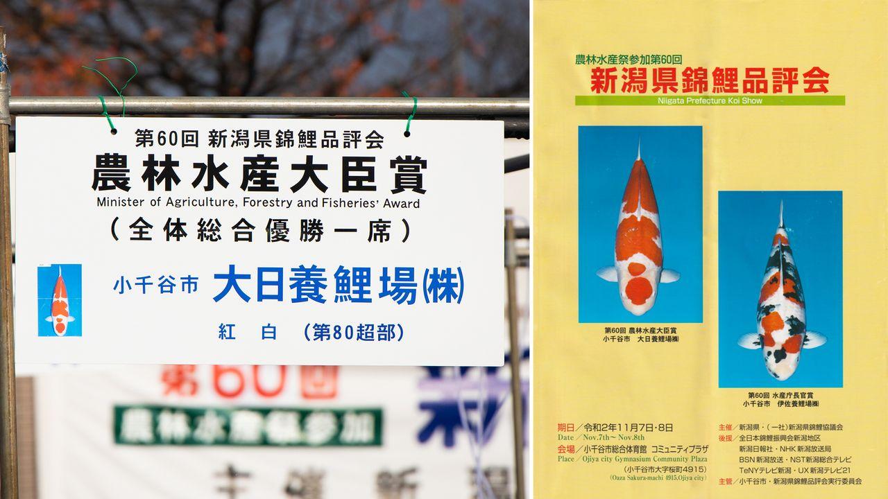 Pamflet menampilkan foto ikan mas yang diambil dari atas.