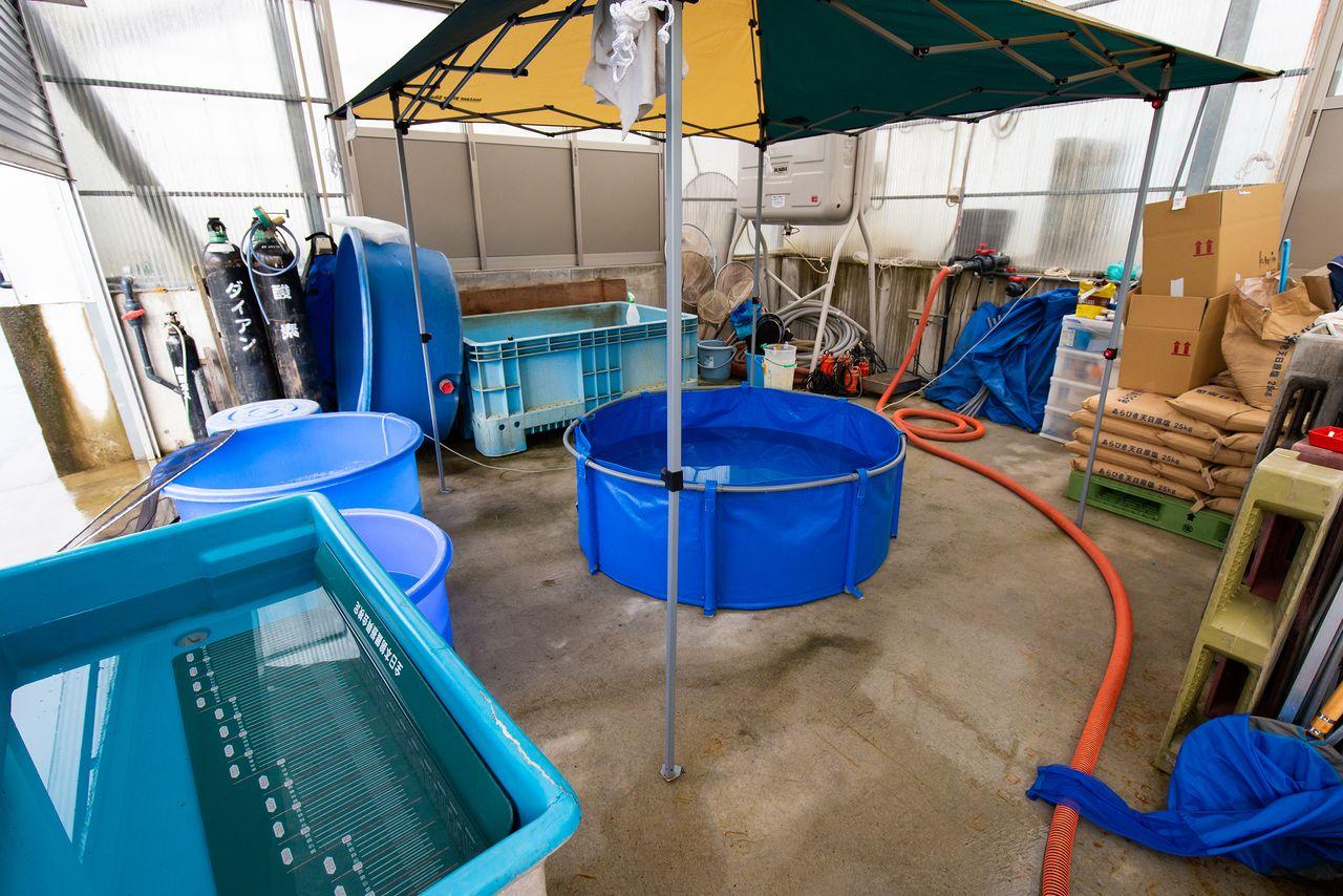Area untuk mengambil foto telah disiapkan di samping tangki akuakultur di Isa Koi Farm. Pandemi COVID-19 telah mendorong peternakan untuk lebih fokus pada penjualan online ke pelanggan luar negeri.