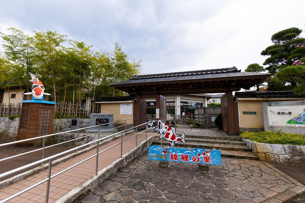 Pintu masuk Nishikigoi no Sato. Harga tiketnya adalah ¥ 520 untuk dewasa dan ¥ 310 untuk siswa SD dan SMP. Fasilitas ini berjarak sekitar 10 menit dengan bus dari Stasiun Ojiya di Jalur JR Jōetsu.