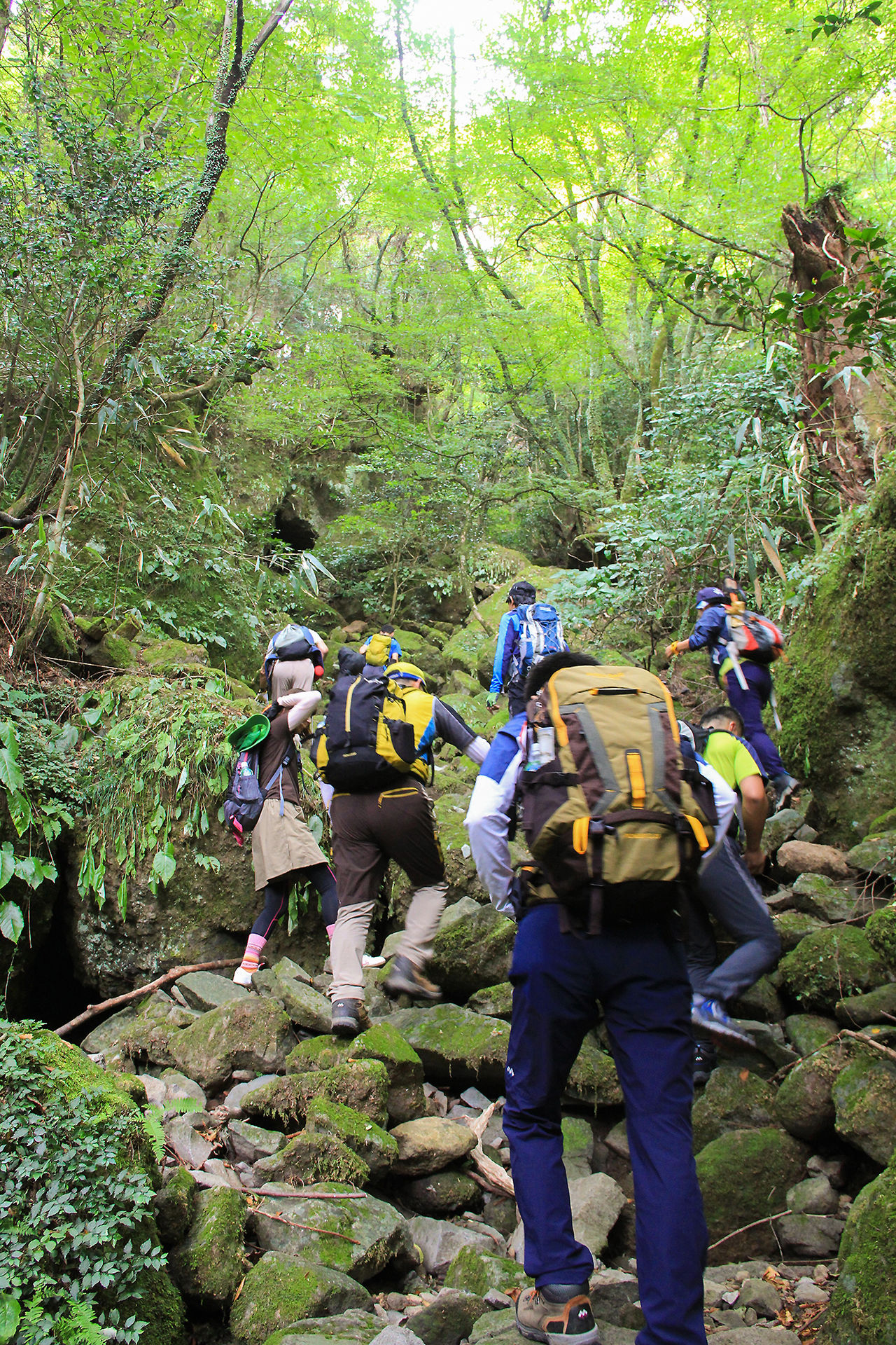 Hikers enter a mysterious realm of virgin forests and enormous moss-covered rocks.