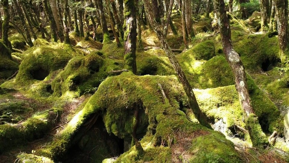 Beat the Heat with a Trip to Nagano's Moss Forest (Video ...