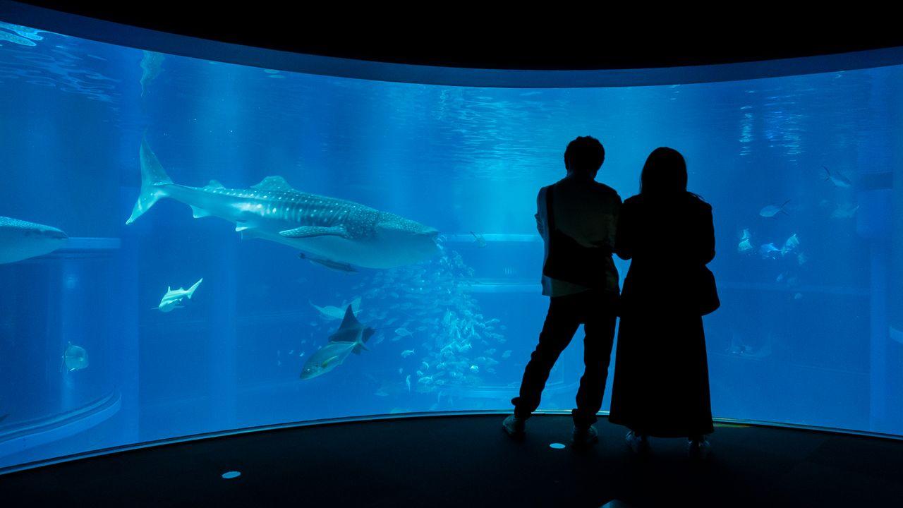 Aquário em Osaka recria habitats do Oceano Pacífico e fascina os visitantes