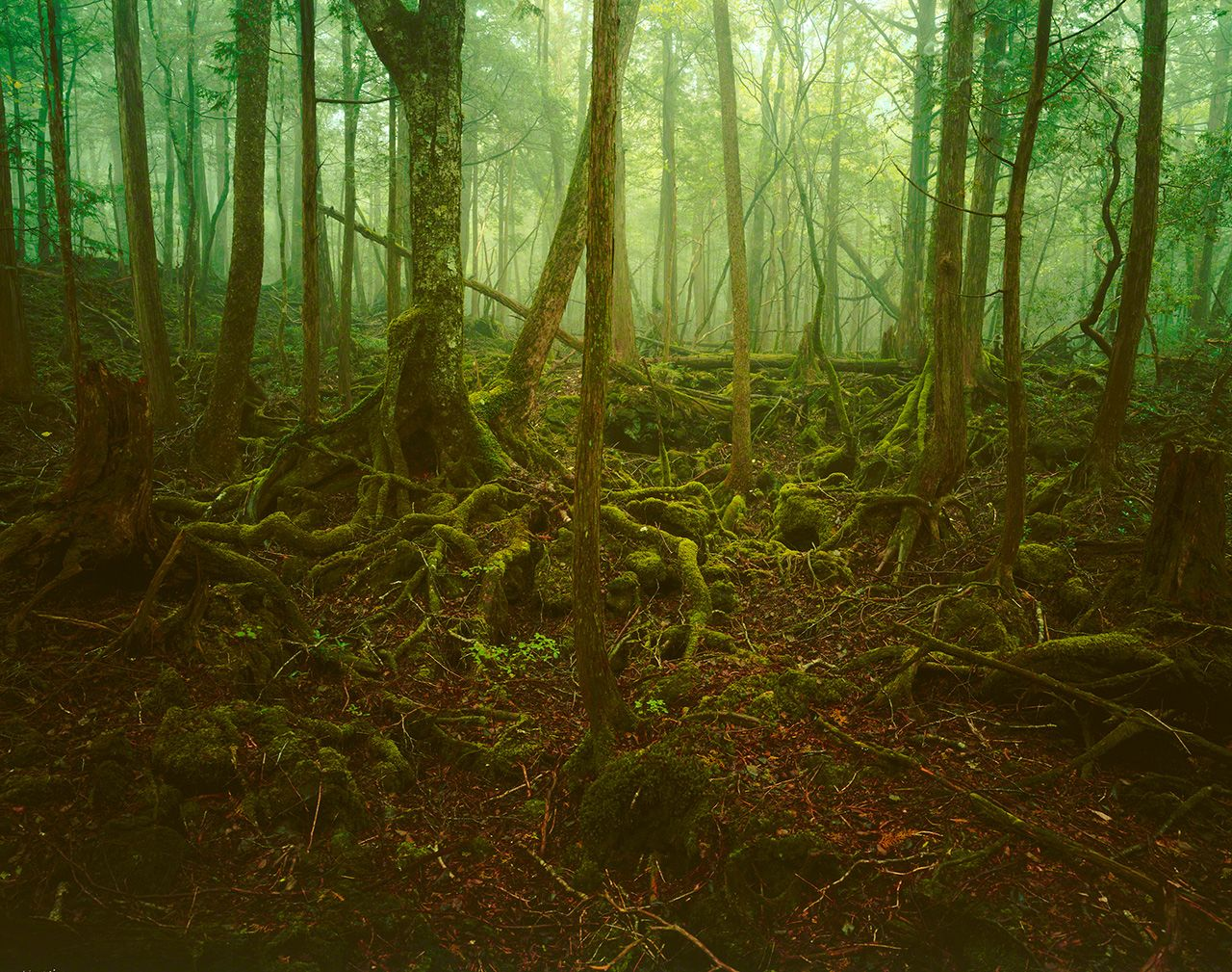 The cool green mist of Aokigahara Forest.
