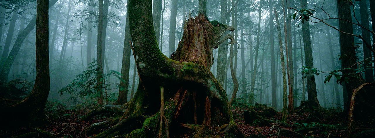 Another view of Aoikigahara Forest.