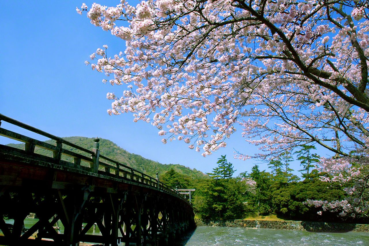 March 28 Cherry blossoms are a welcome sight as you approach the Uji Bridge on a beautiful spring day.