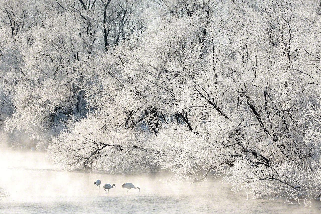 A family searches for food among the frost (January).