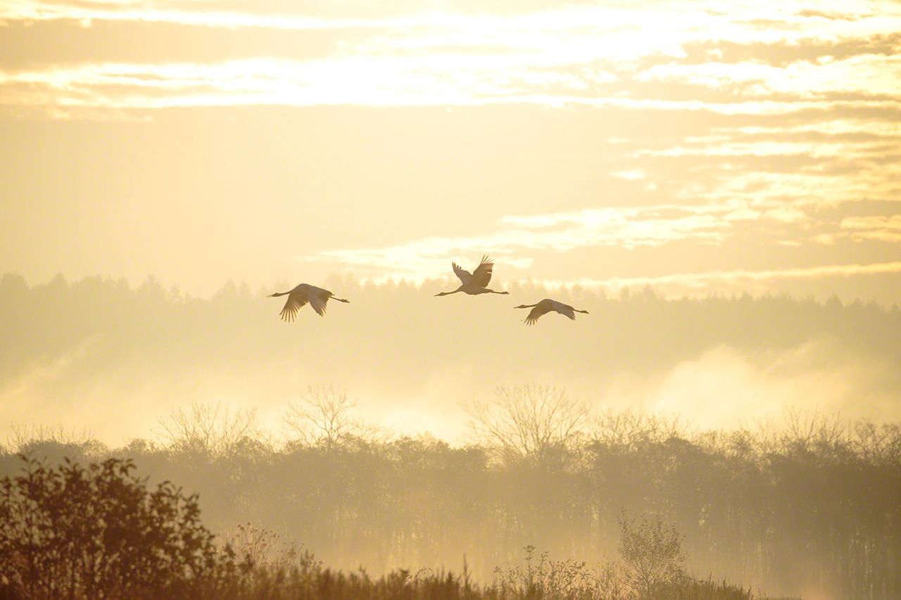A family flies through morning mist (October).