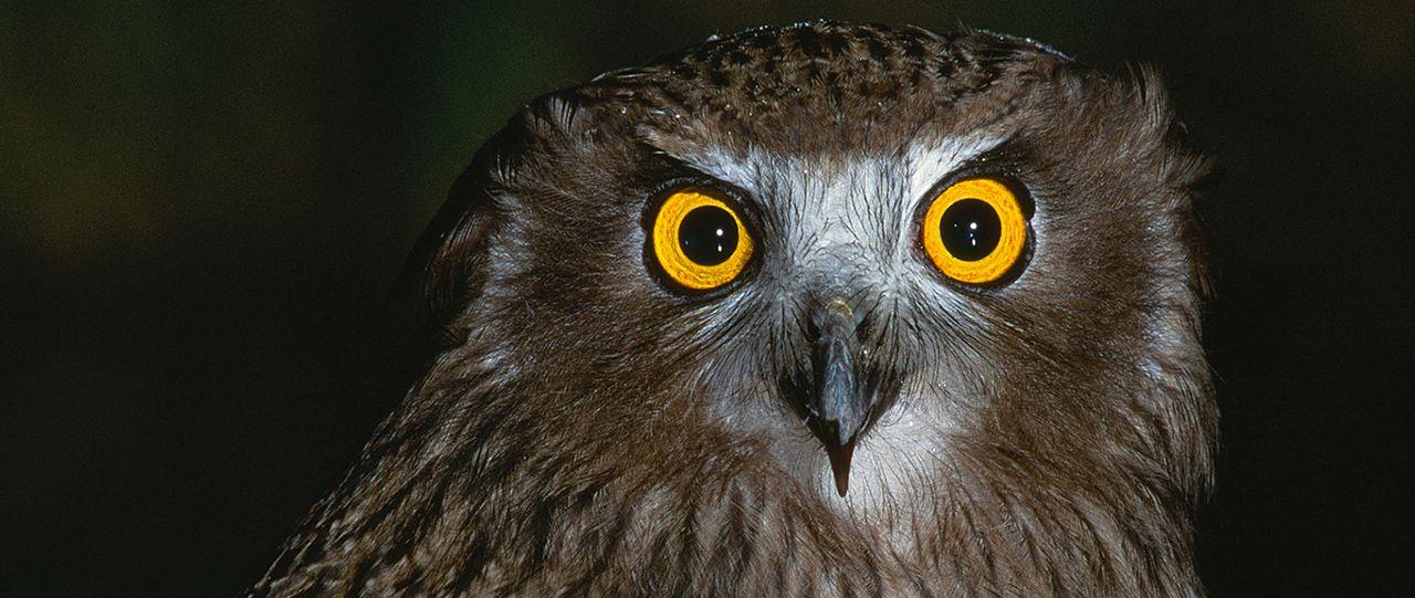 In Photographic Pursuit Of Hokkaidō S Rare Owls Photos Nippon Com