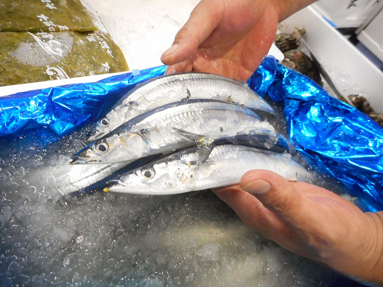 Buyers at Toyosu Fish Market have taken issue with the lower quality of early season saury. (© Kawamoto Daigo)