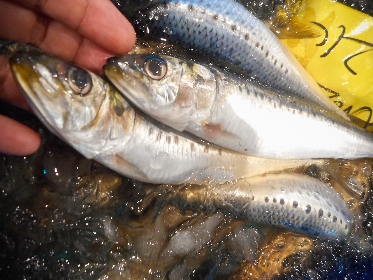Sardines have gained popularity among consumers for their freshness and quality. (© Kawamoto Daigo)