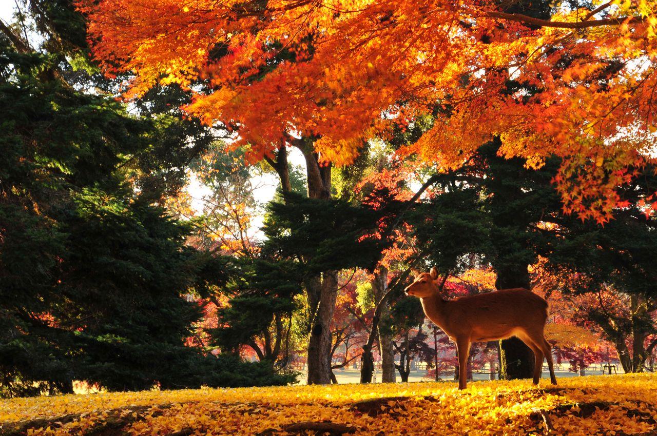 Taman Nara. (© Pixta)