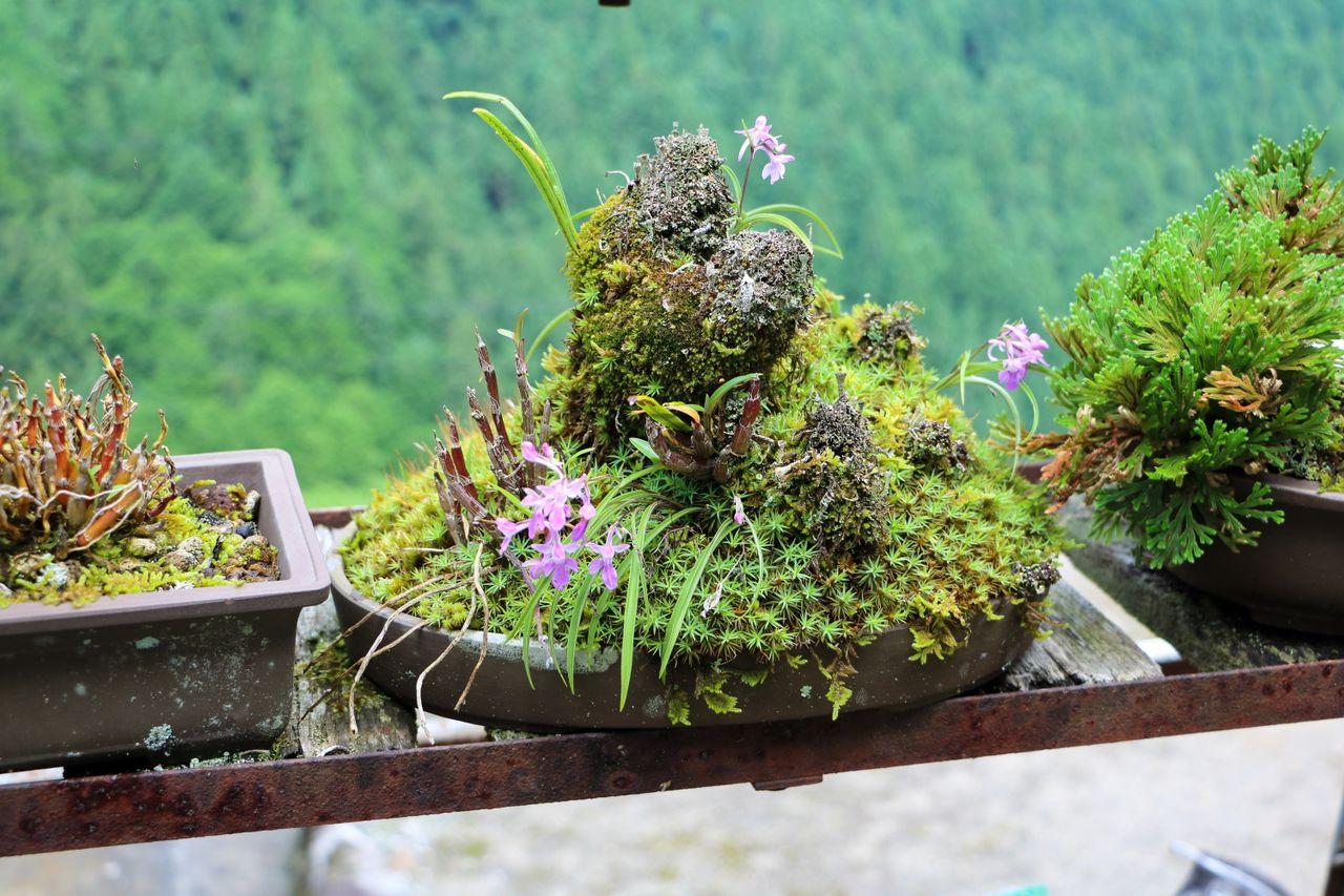 Un affichage de mousse incorporant de la roche et des fleurs sauvages.