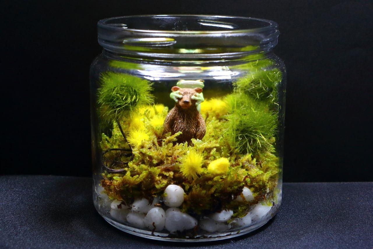 Les figures d'animaux ajoutent une touche humoristique à un terrarium de mousse.