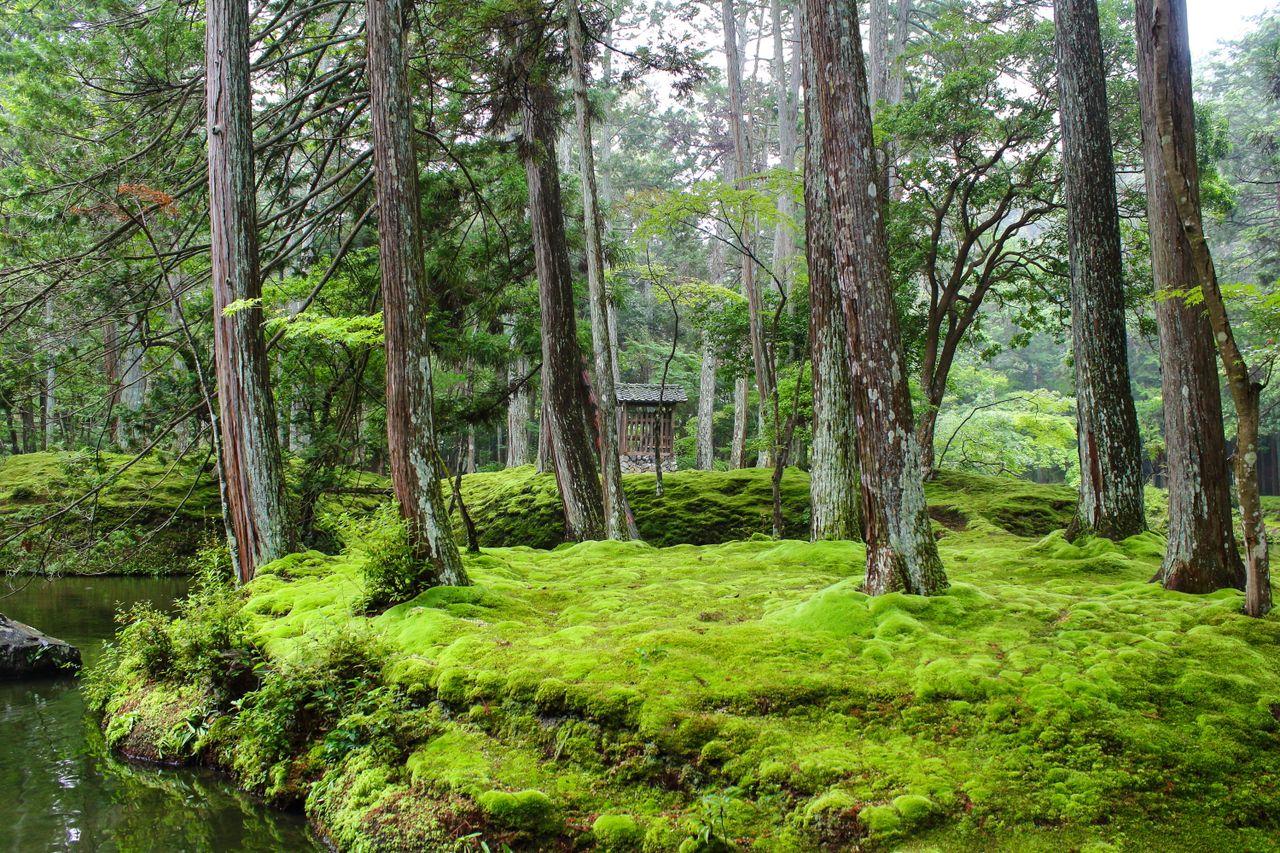 La mousse semble recouvrir chaque centimètre carré du jardin japonais de Saihōji à Kyoto.  Le temple fait partie d'un site du patrimoine mondial de l'UNESCO.