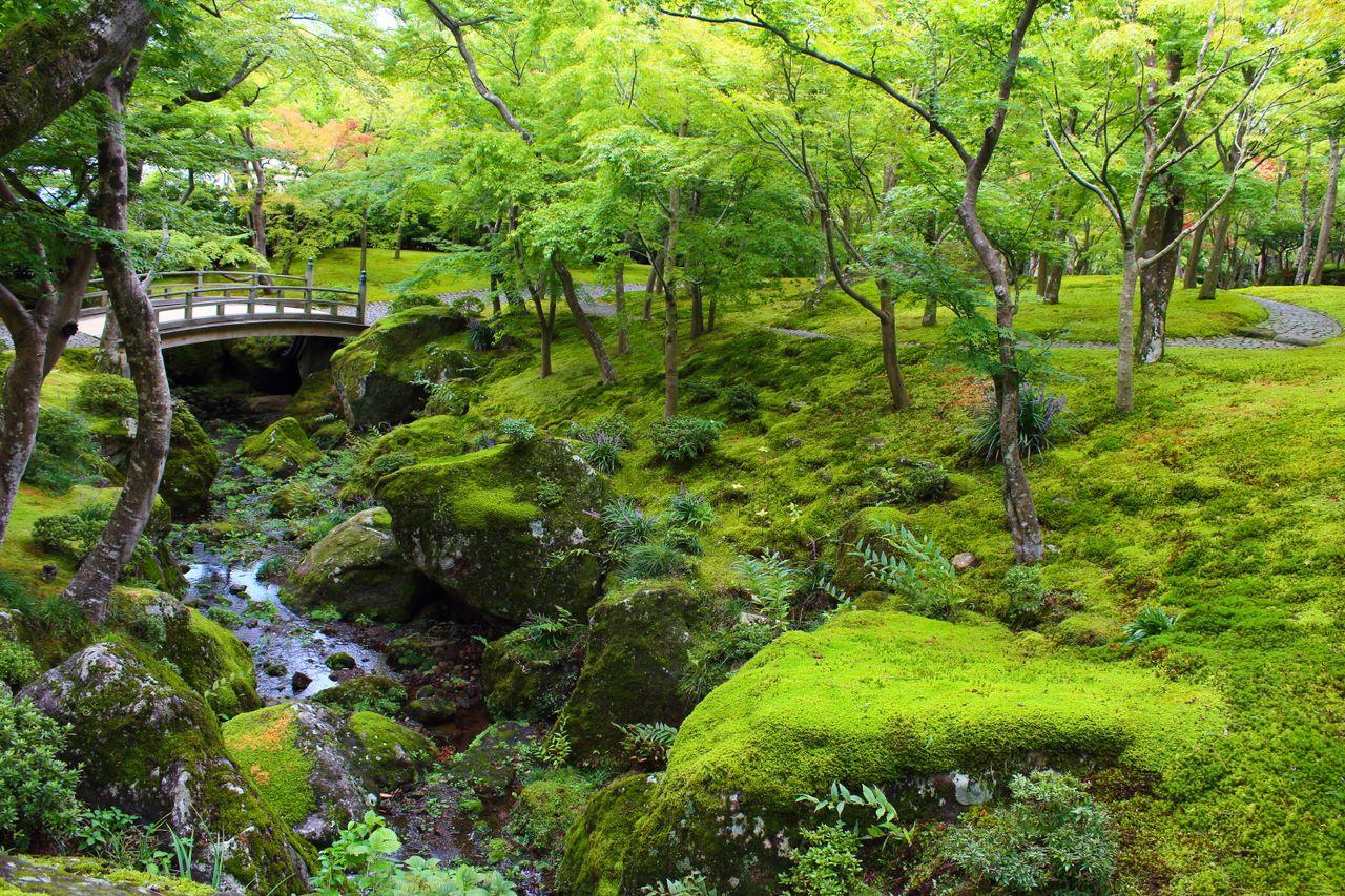 Le paysage varié du jardin du musée d'art de Hakone dans la préfecture de Kanagawa abrite une grande variété d'espèces de mousse.