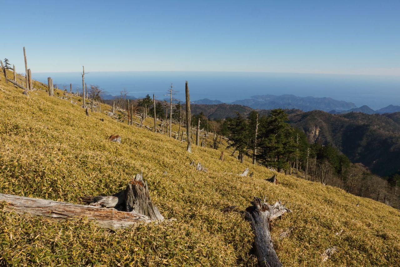 Les troncs d'arbres morts épars le long des pentes du mont Ōdaigahara dans la préfecture de Nara sont tout ce qui reste d'une forêt autrefois luxuriante et couverte de mousse.  Au cours des 30 dernières années, des troupeaux de cerfs affamés ont décimé l'environnement.