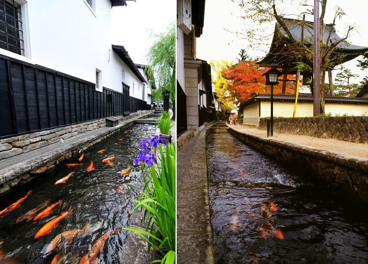 The Seto River is popular with visitors. Colored carp gleam like gems against a backdrop of whitewashed warehouse walls. (Courtesy Hida Tourism Association)