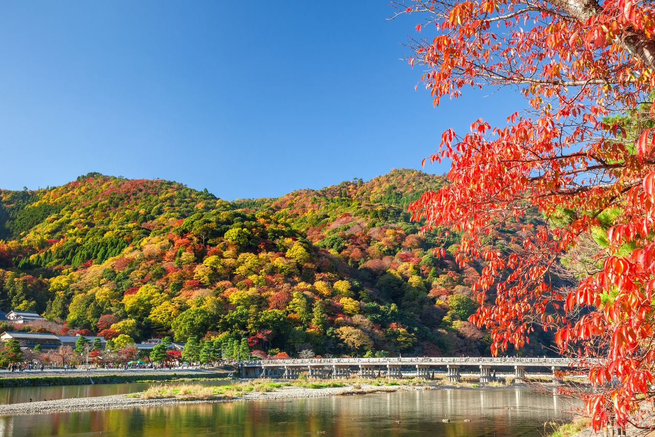 Arashiyama is famous for both its fall foliage and cherry blossoms.  The colorful hill combined with the famous Tōgetsukyō Bridge spanning the Katsu River to create a fantastic view.  (© Pixta)