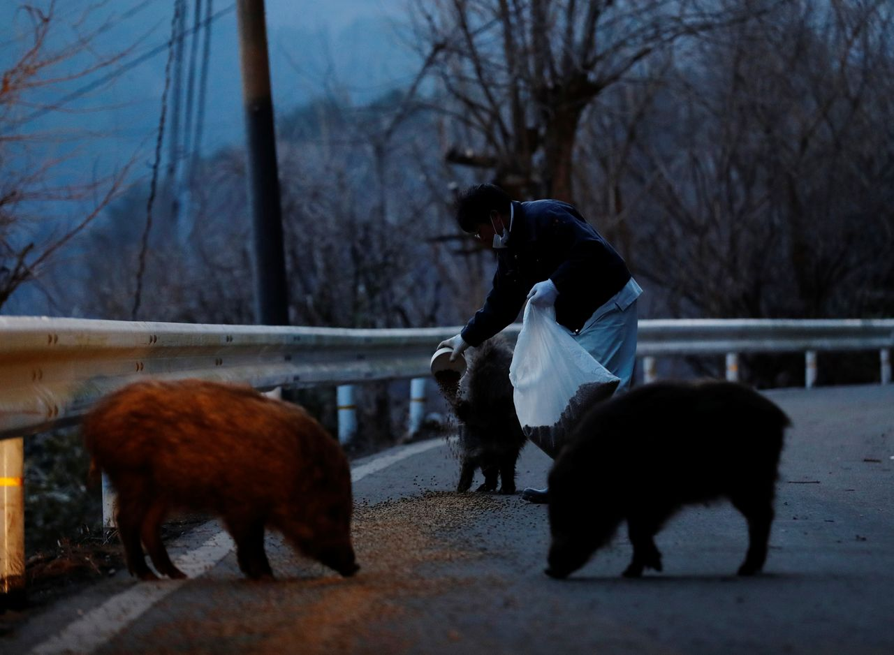 Sakae Kato feeds wild boars in front of his home, in a restricted zone in Namie, Fukushima Prefecture, Japan, February 20, 2021. A decade ago, Kato stayed behind to rescue cats abandoned by neighbours who fled the radiation clouds belching from the nearby Fukushima nuclear plant. He won't leave. I don't want to leave, I like living in these mountains,