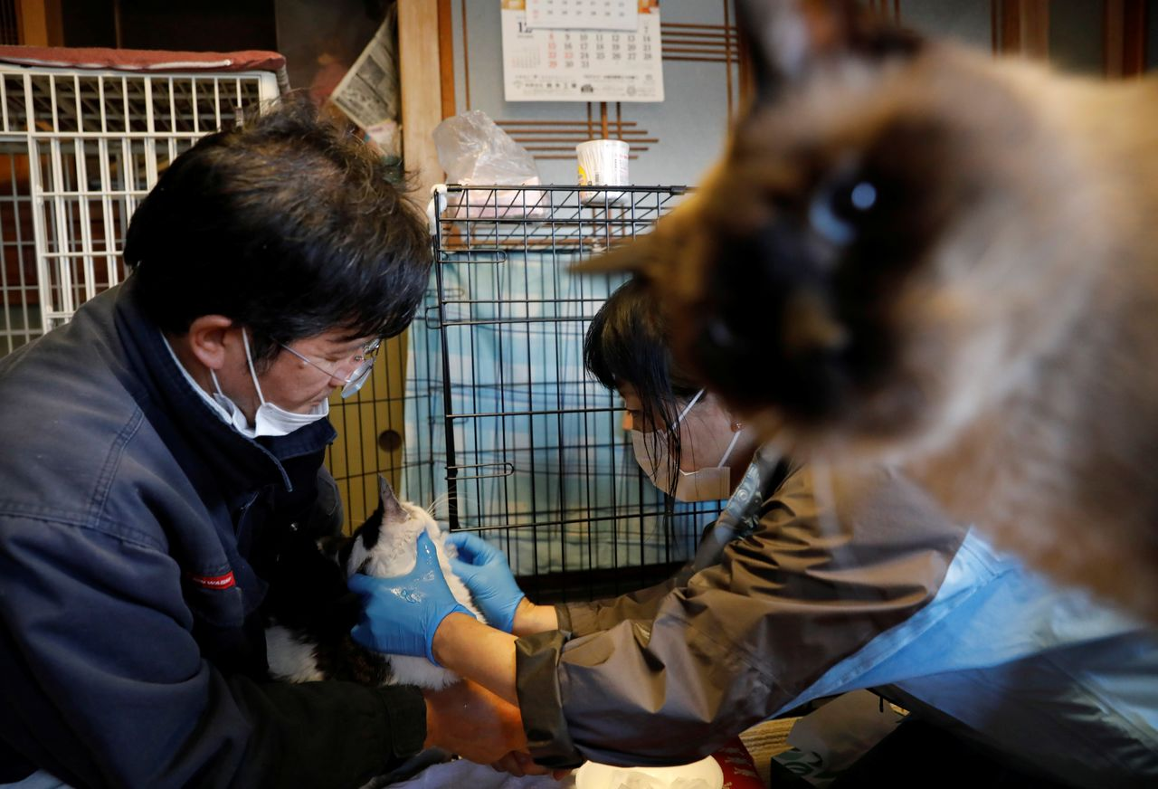 Sakae Kato holds Mokkun, a rescued cat, while an animal rescue activist applies an ointment onto its mouth at Kato's home, in a restricted zone in Namie, Fukushima Prefecture, Japan, February 21, 2021. Kato looks after 41 cats in his home and another empty building on his property. A decade ago, he stayed behind to rescue cats abandoned by neighbours who fled the radiation clouds belching from the nearby Fukushima nuclear plant. He won't leave. I want to make sure I am here to take care of the last one,