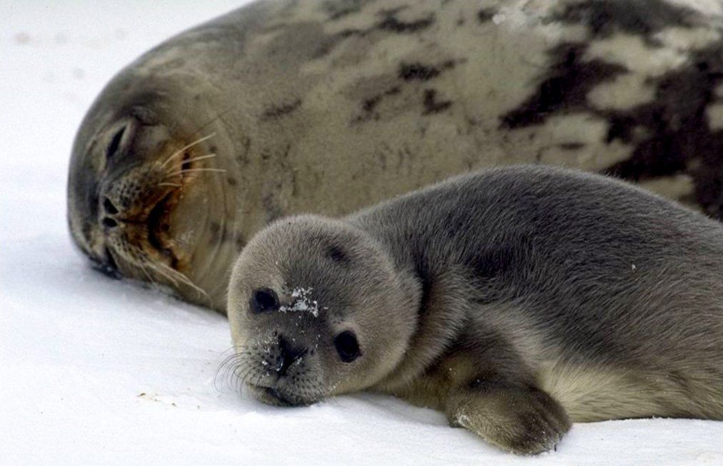 Seals were a common sight near the station's coastal observation posts.