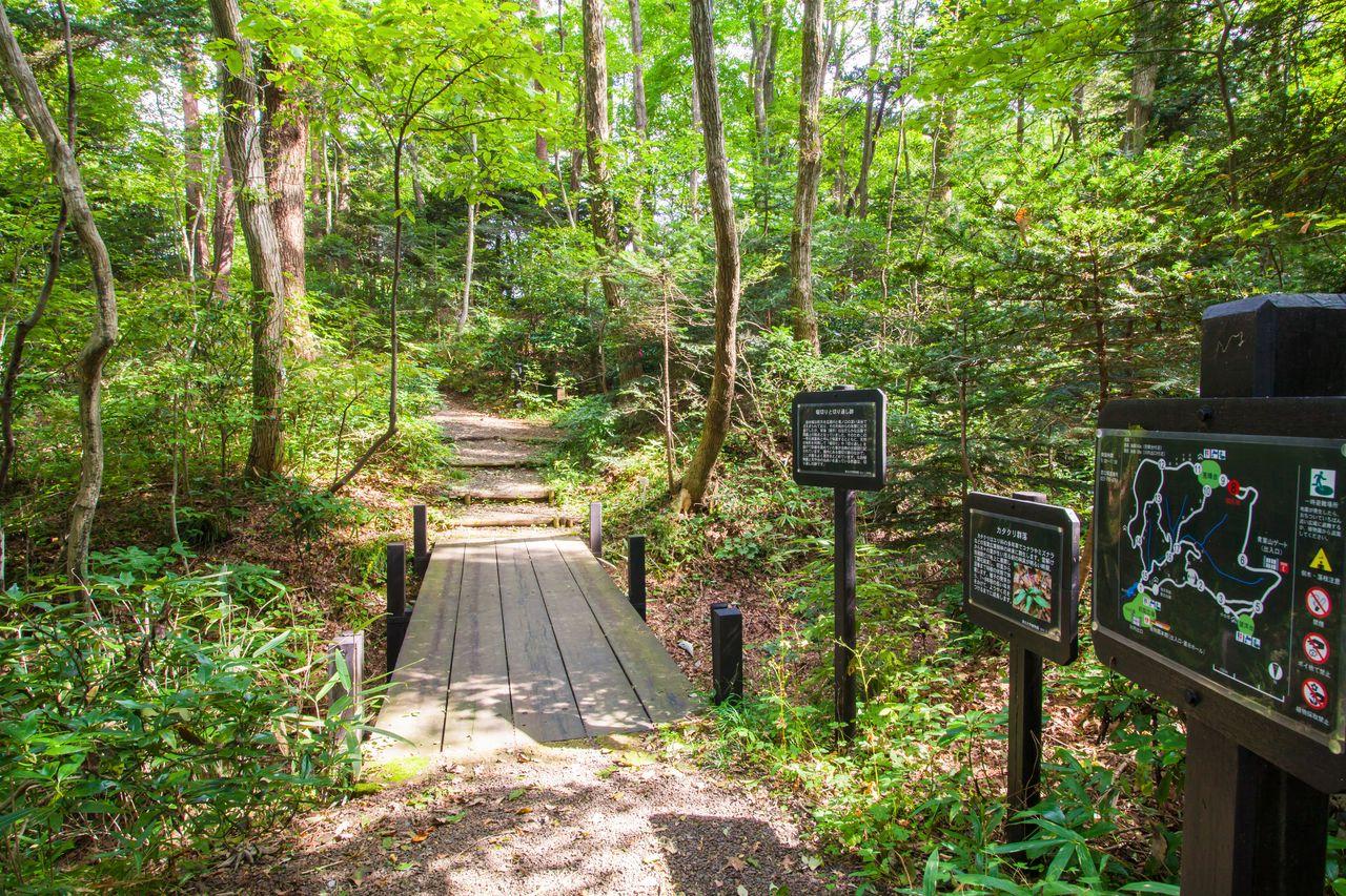 El bosque de abetos del monte Aoba en el jardín botánico de la Universidad de Tōhoku. (Fotografía por cortesía de la Asociación Internacional de Turismo de Sendai)