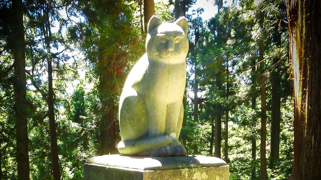 Un viaje por Japón para descubrir las leyendas sobre los gatos autóctonos