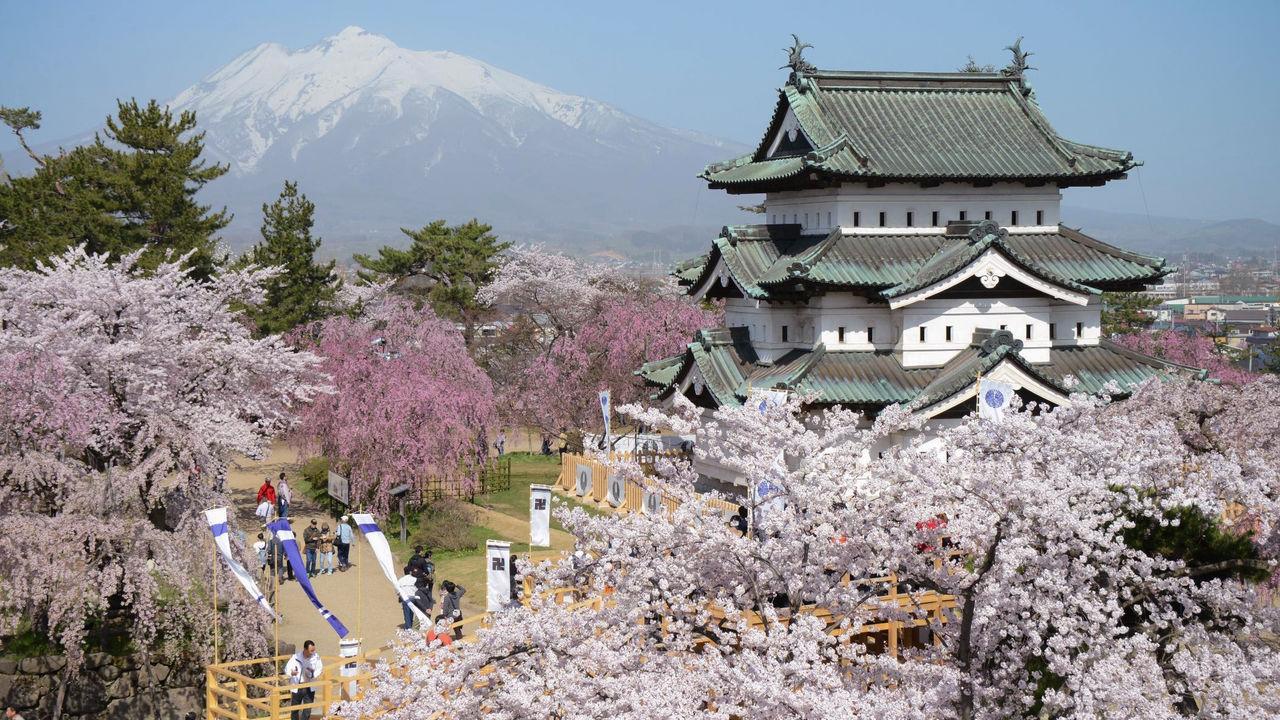Hauteur Cerisier Du Japon trois meilleurs sites de cerisiers dans le tôhoku [2] : le