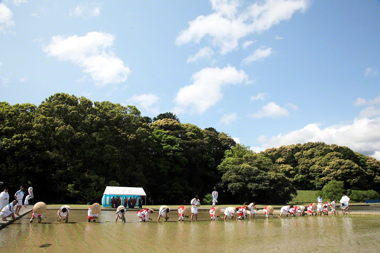 5月12日 伊勢神宮各種祭祀活動使用的御料米(用於神饌的稻米)。插秧在樂師們演奏的田樂(日本傳統舞蹈)聲中進行