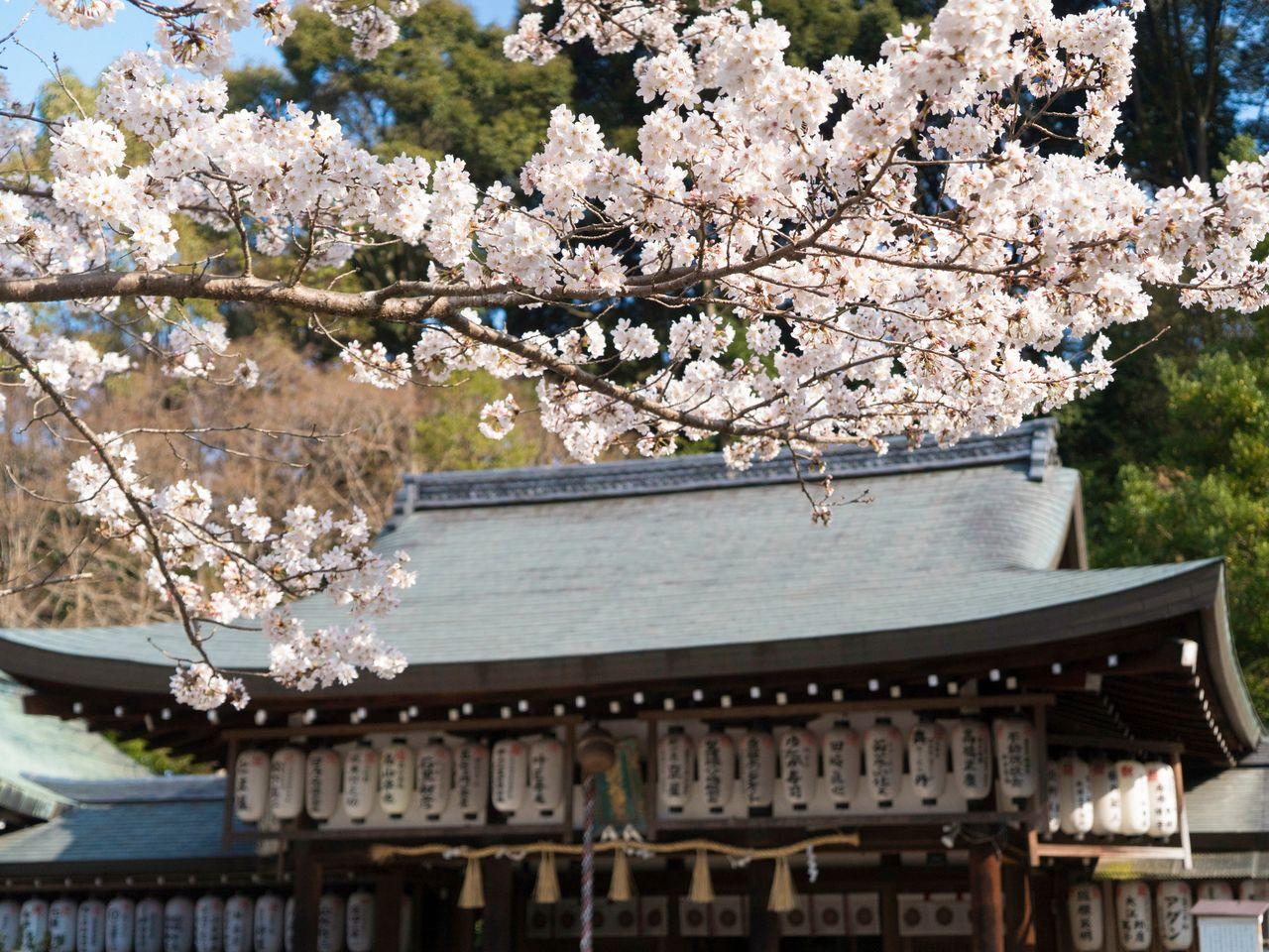 「哲学の道」の桜をくぐり抜け「熊野若王子神社」へ:京都・桜の名所巡り