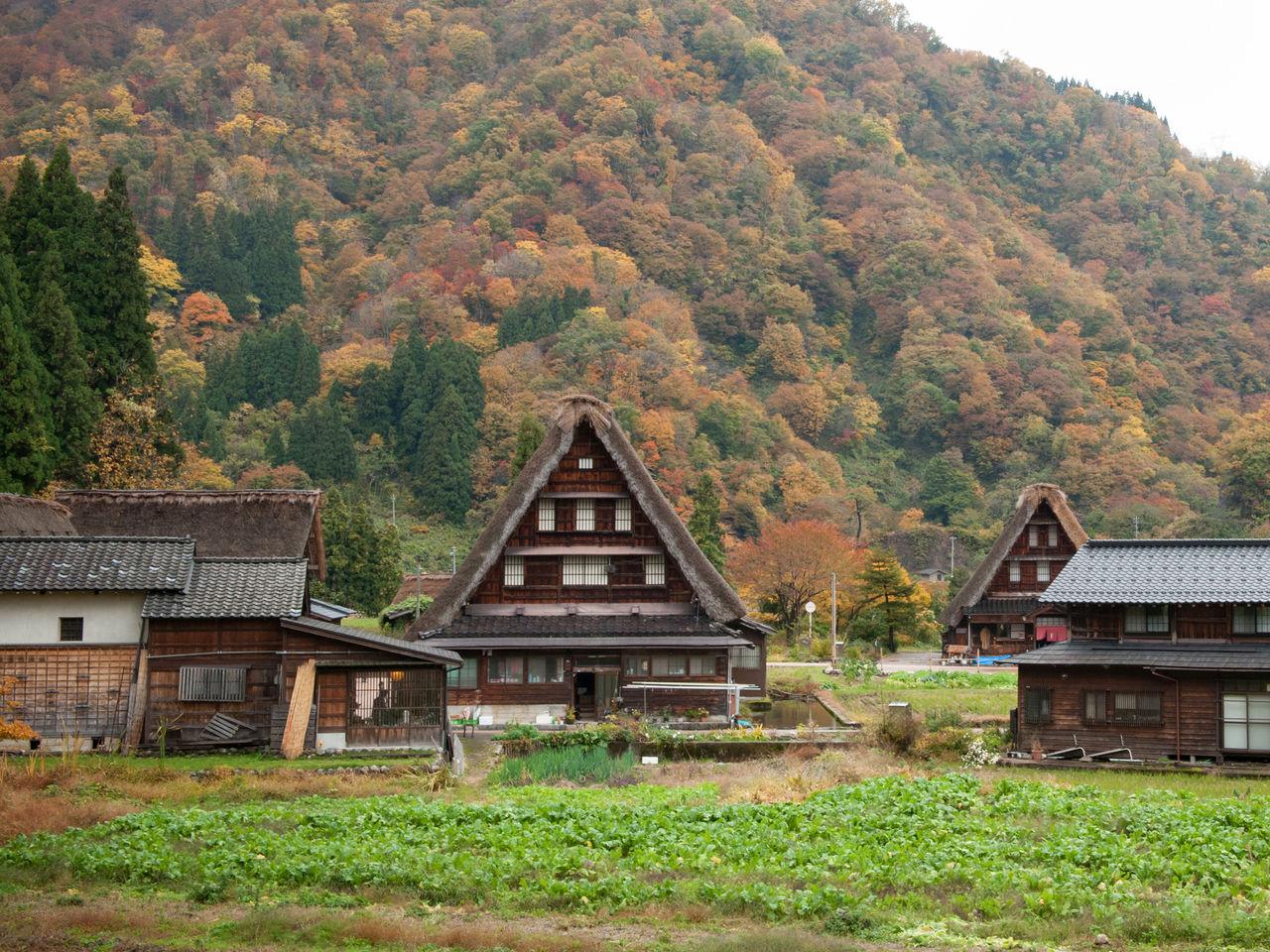 白川郷・五箇山の合掌造り集落の画像 p1_36