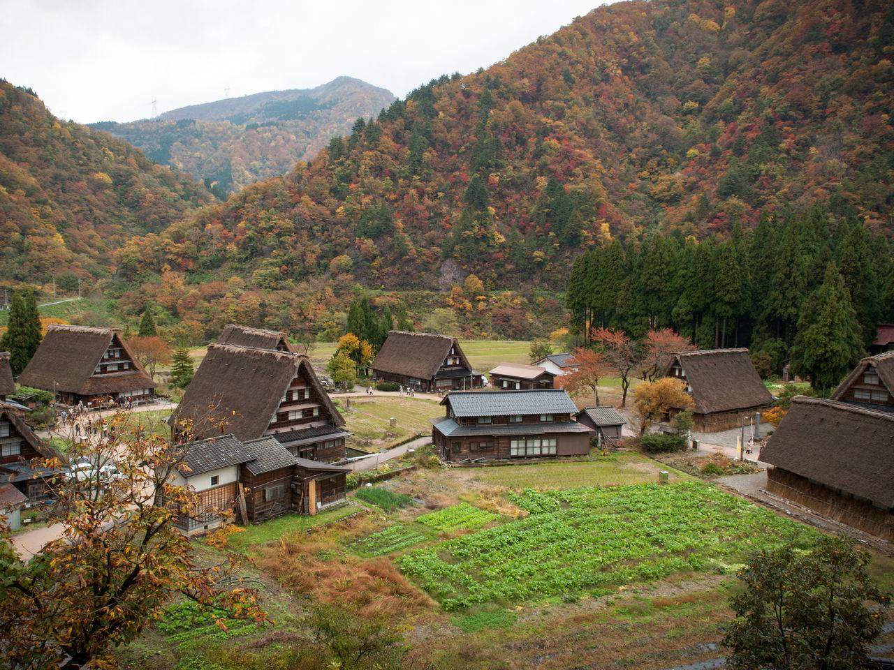 紅葉で彩られる世界遺産「白川郷・五箇山の合掌造り集落」
