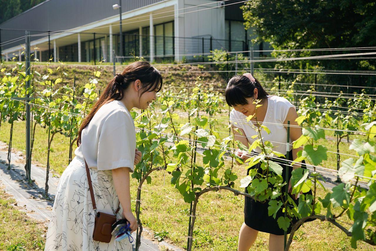 敷地内にある「ワイン用ブドウ実証圃場」も公開している 写真提供:郡山市