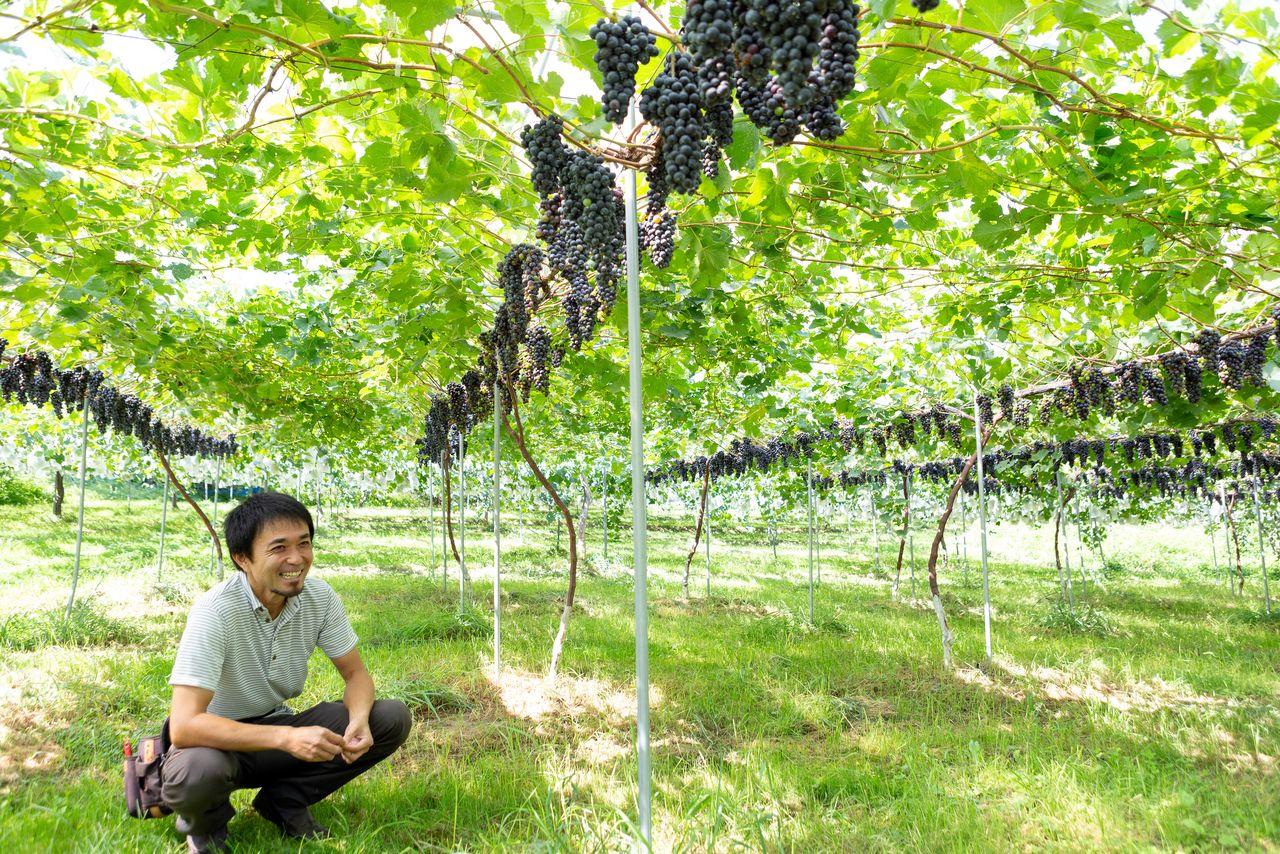 郡山市中田町にある「中尾ぶどう園」のワイン用ブドウ畑。45年以上もブドウを手掛けているが、ワイン用は2016年に始めたばかり 写真提供:郡山市