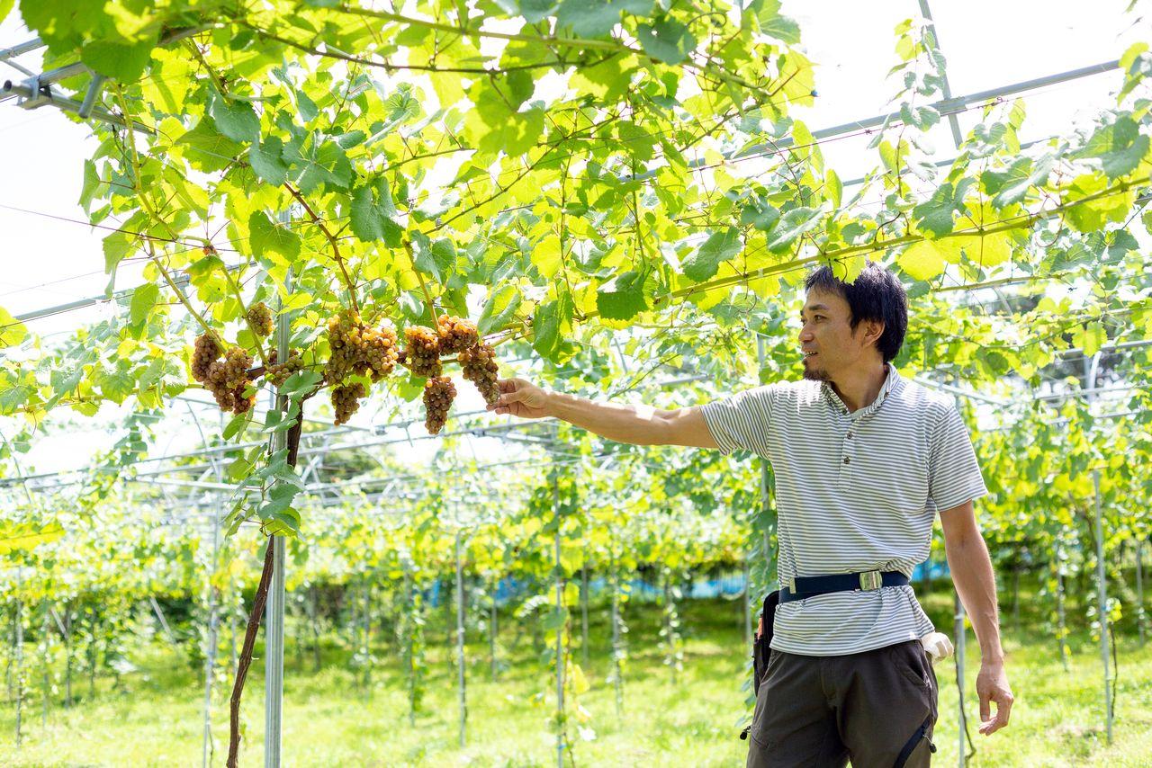 中尾秀明さんも「うちのブドウだけで造ったワインが飲みたい」という一人 写真提供:郡山市