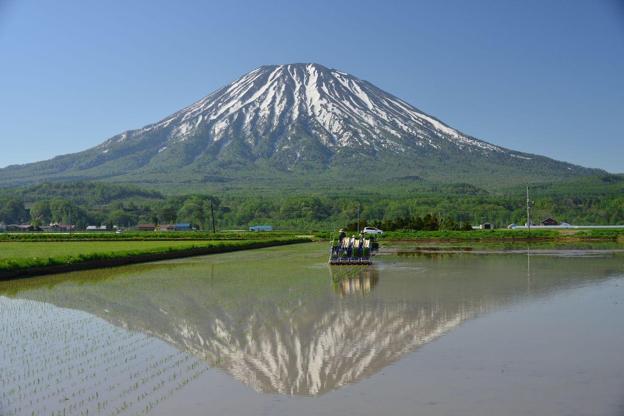 蝦夷富士 : 羊蹄山 (PIXTA)