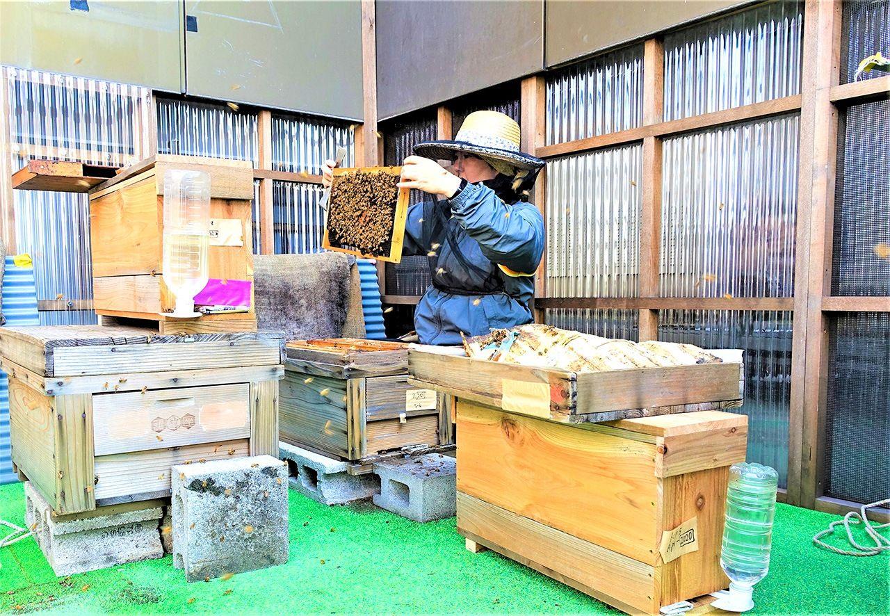 寒さが厳しくなる前に、巣箱を開けてミツバチのチェックを行う